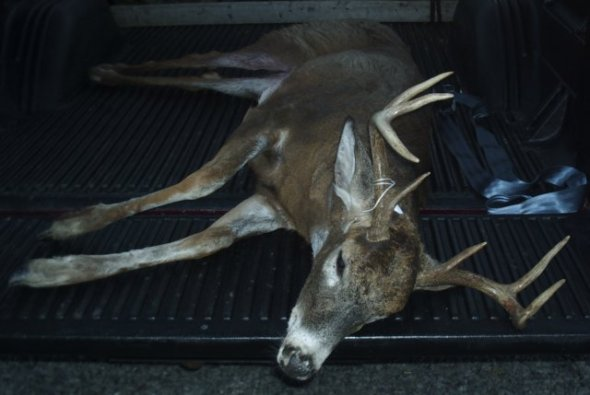 Nice 10 Point!